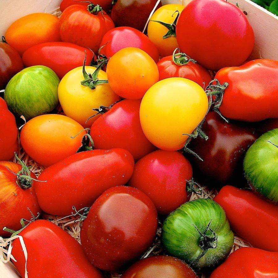 tomaten(C)vockenhuber_lo