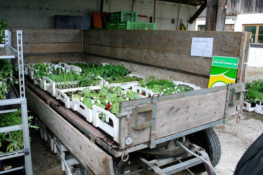 Jungpflanzen zum Verkauf ab Hof